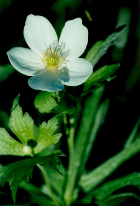 shop native plants native flowers morning sky greenery
