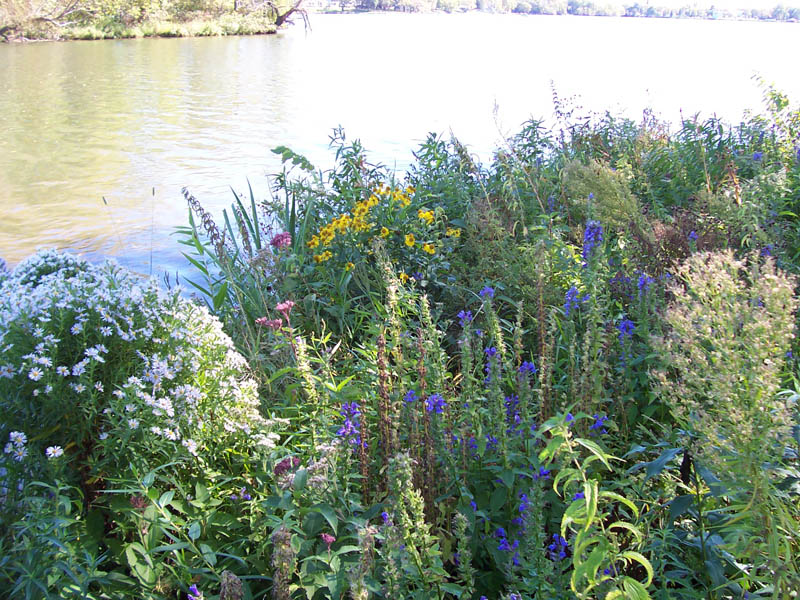 Wildflower Lakeshore or Prairie Packages