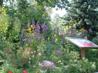Wildflower Garden Packages