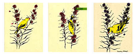 � � Notecard Set 3: Finch Feast