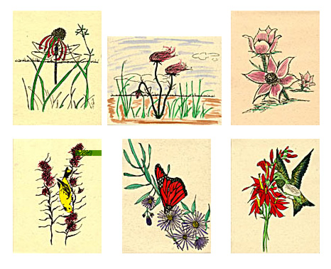 � � Notecard Set 1: Prairie Wildflowers