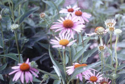 Native Plants for Clay Soil