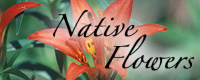 Shop for Native Prairie Flowers