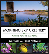 Morning Sky Greenery: MN Native Plants Catalog