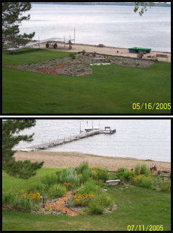 Shoreline Restoration - Just planted and 2 months after