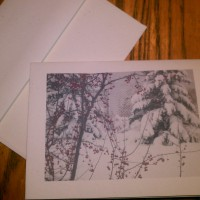 Crabapples and evergreens gift certificate