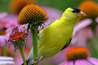 Native Plants to Attract Birds