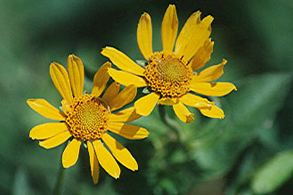 Native Plants for Difficult Clay Soil