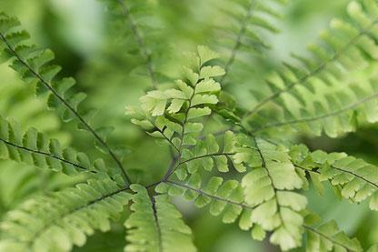 Native Plants for Erosion Control