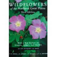 Wildflower_Northern_Plains